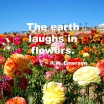 Flowers laugh