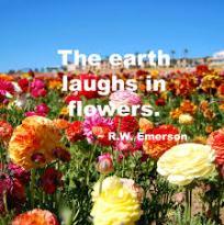 Flowers laugh