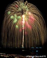 Firework-Willow