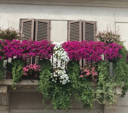 Flowers and shutters1
