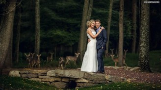 Wedding-deer