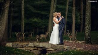Wedding-deer