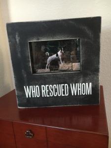 Rescue frame1