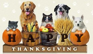 happy-thanksgiving-pets1